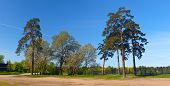 image of sankt-peterburg  - Trees in spring park a panorama Sankt - JPG