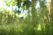 Detailed Abstract Meadow Grass Background .imacro Closeup, Large Detailed Pattern poster