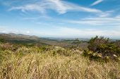 stock photo of fynbos  - Overlooking the plantation on the hills South Africa - JPG