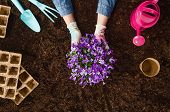 Planting A Plant With Gardening Tools On Fertile Soil Texture Background Seen From Above, Top View.  poster