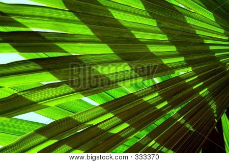 Palm Leaves Crossed In Backlight