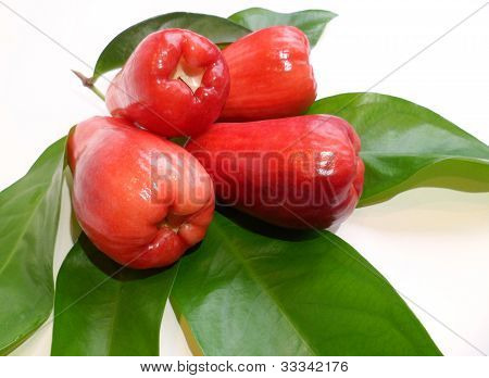 Mountain Apple (Syzygium malaccense)