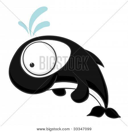 Big-eyed Killer Whale