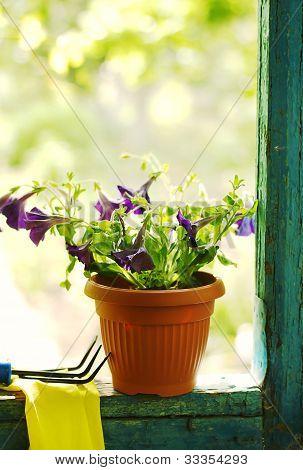 Petunia Flowers On Garden House Verandah