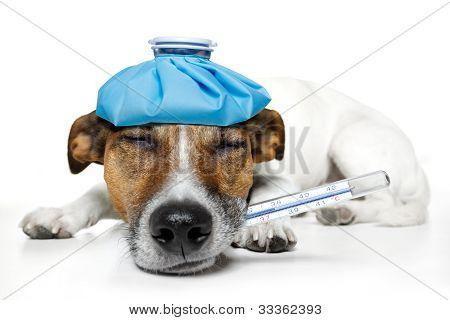 perro enfermo