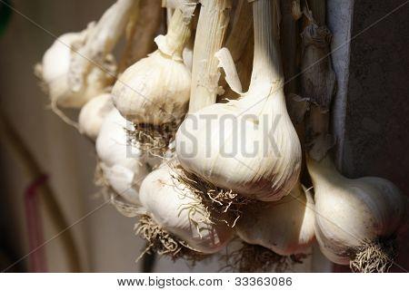 Cipolla Food