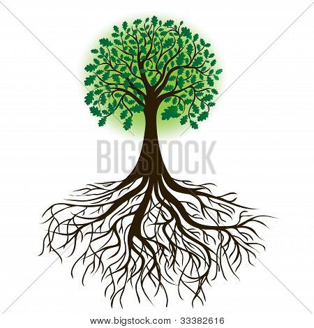 oak tree with roots and dense foliage, vector