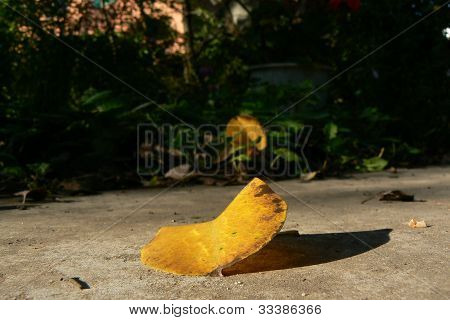Lonesome leaf