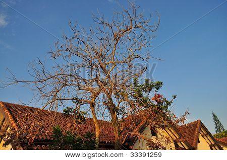 Bare desolate tree