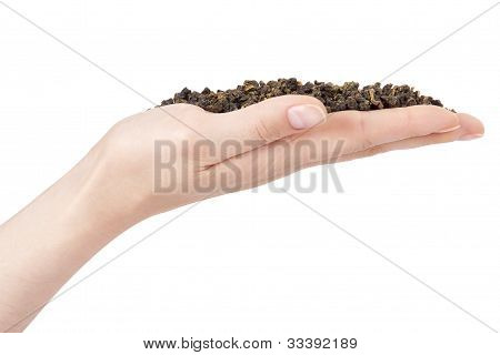 Holding Green Tea