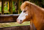 stock photo of workhorses  - Profile portrait of pony at farm with space for copy - JPG