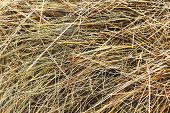 Abstract Background Of Dry Hay. The Natural Texture Of Dry Straw Is Made From Dry Grass. Pet Food. poster