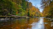 Autumn At Allen Banks And River Allen, Flowing Through Staward Gorge In The English County Of Northu poster