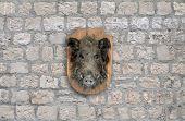 stock photo of taxidermy  - wild boar head taxidermy on stone wall background - JPG