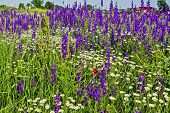 Wild Meadow Flowers poster