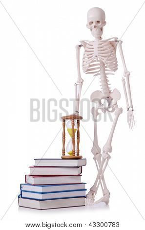 Skeleton reading books on white