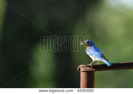 Blue Bird Snack
