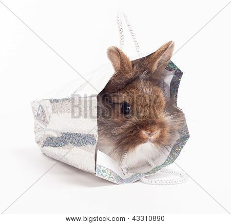 Rabbit isolated on the white