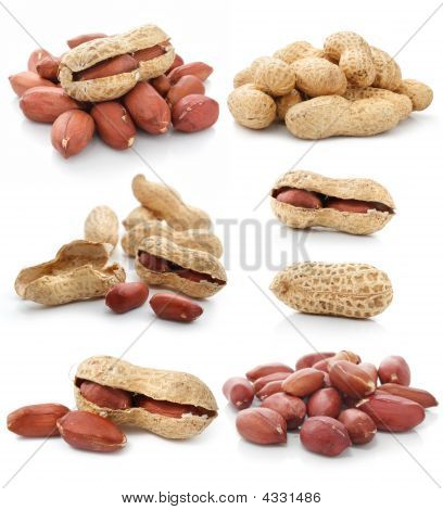Collection Of Dried Peanut Fruits Isolated