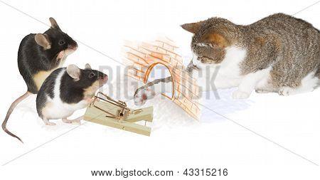Armadilha do gato