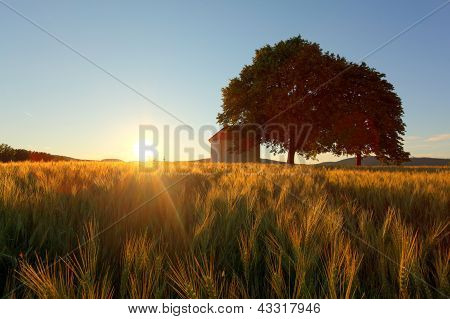 Sunset Over Wheat Field