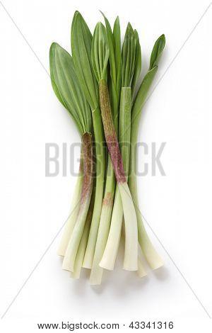 alpine leek, victory onion