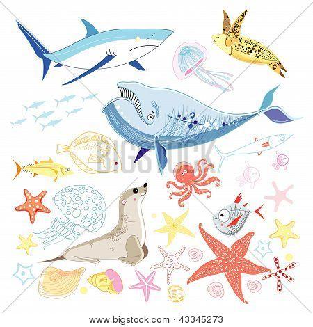 Graphic Marine Animals