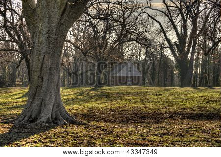 Oak Trees On Ranch