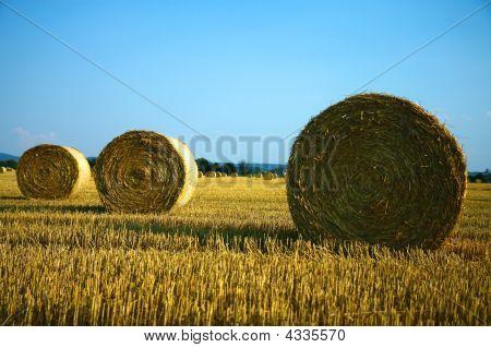 Bey Of Barley Hay