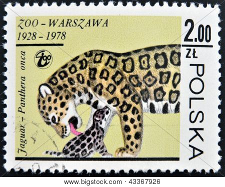 stamp printed in Poland shows a Panthera onca
