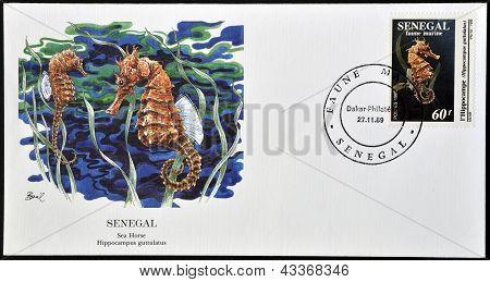 A stamp printed in Senegal shows sea horse hippocampus guttulatus circa 1989