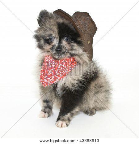 Cowboy Puppy