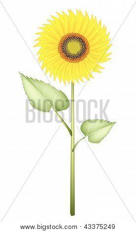 Drawn, Beauty, Romantic, Nature, Concepts, Decoration, Design, Sign, Symbol, Flower, Blossom, Beauti