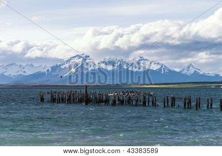 Lake At Puerto Natales In Chile With Birds