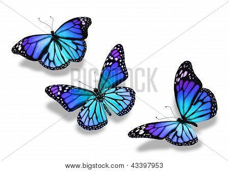 Three Turquoise Blue Butterflies, Isolated On White Background