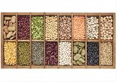 picture of soybeans  - old wooden typesetter box with 16 samples of assorted legumes - JPG