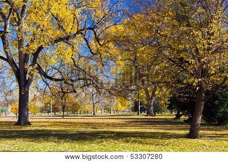 Fall Trees In City Park