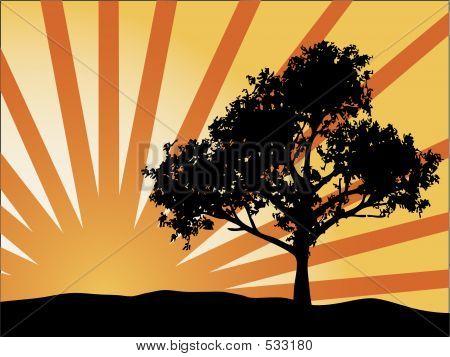 Rayos de sol del árbol