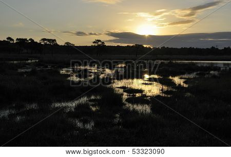 Sun rise over Thursley Common
