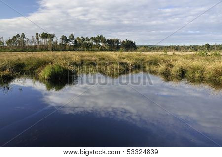 Reflections at Thursley Common