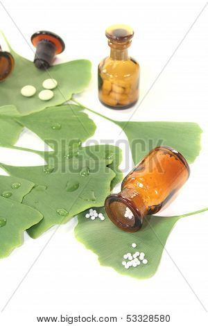 Ginkgo Leaves With Globules