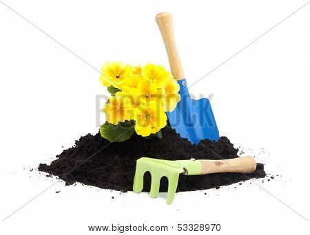 Pile Of Black Garden Soil With Primula Flower And Tools
