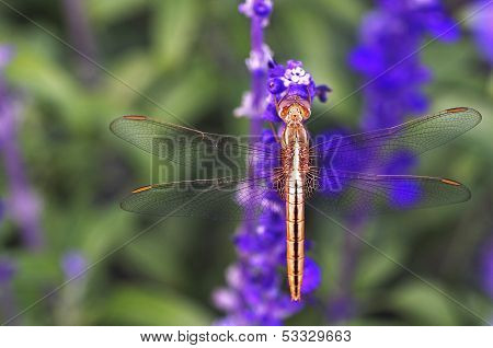 close up of the dragonfly on flower