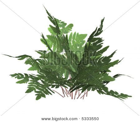 Green Forest Fern