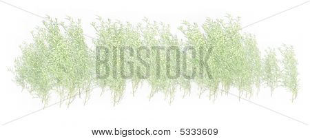 White And Green Grass Foliage