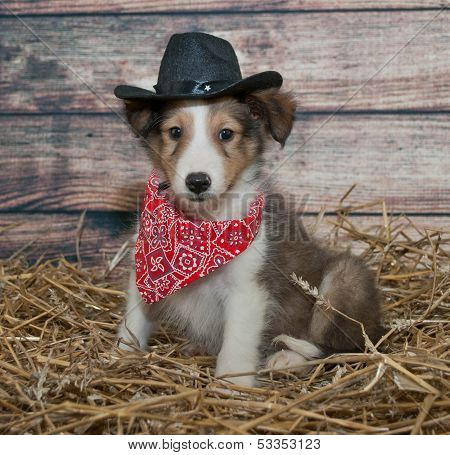Cute Little Cowboy Puppy