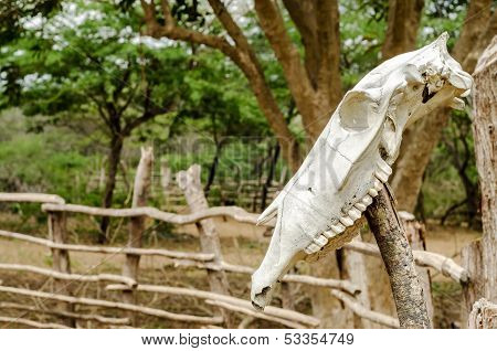 Cow Skull On A Fence
