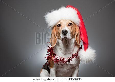 Cute Funny Christmas Dog.
