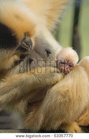 Close Up View Of Monkey Animal Baby