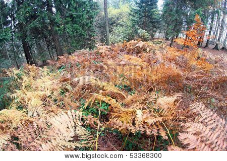 Fern Forest With Many Dried Leaves